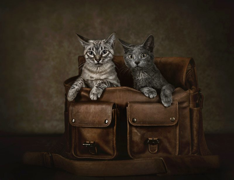Fotografo-estudio-mascotas-talavera-de-la-reina-012