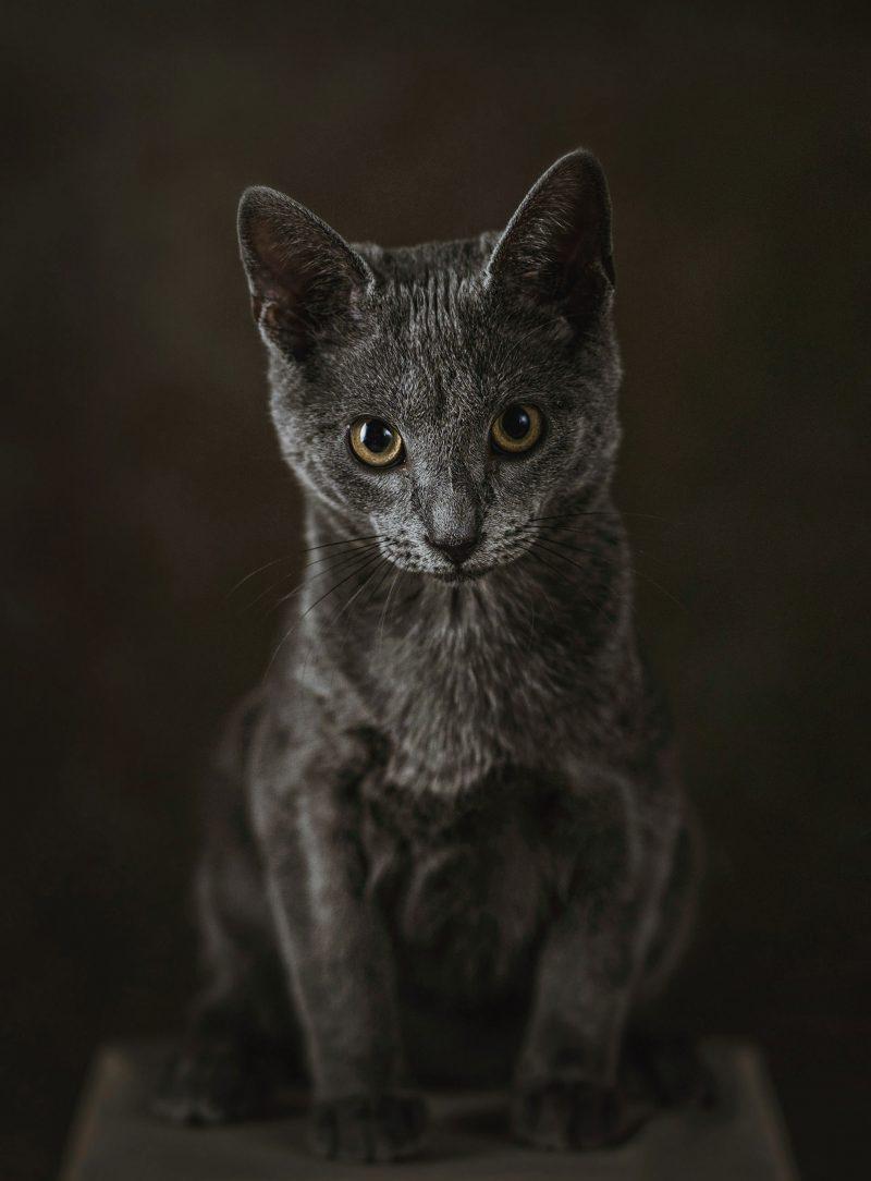 Fotografo-estudio-mascotas-talavera-de-la-reina-016