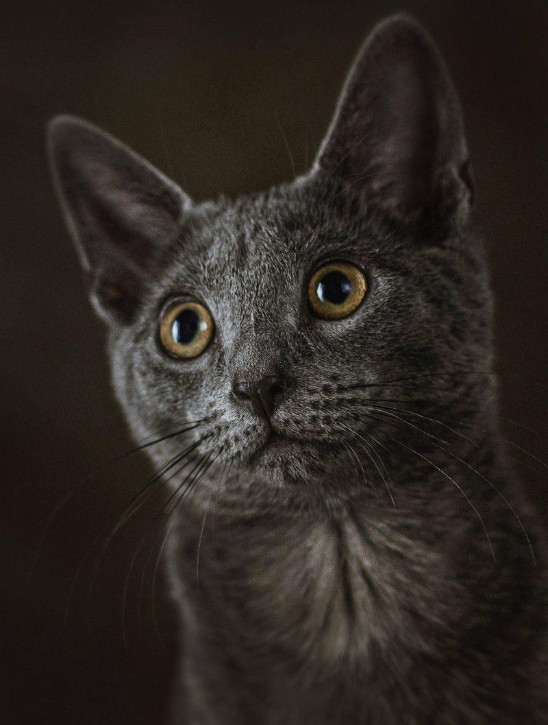 Fotografo-estudio-mascotas-talavera-de-la-reina-017