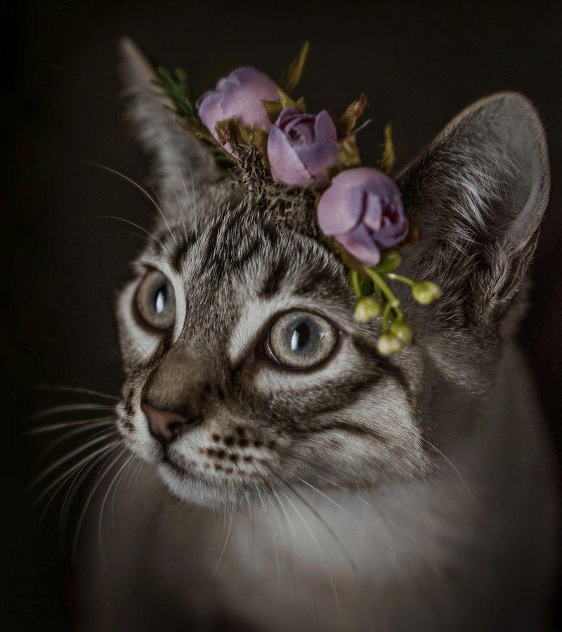 Fotografo-estudio-mascotas-talavera-de-la-reina-018